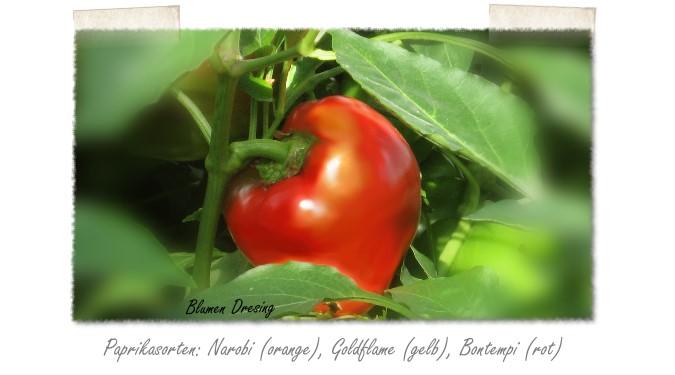 Klettergerüst Tomate : Fruchtgemüse ihre adresse für floristik und gartenbau in dortmund