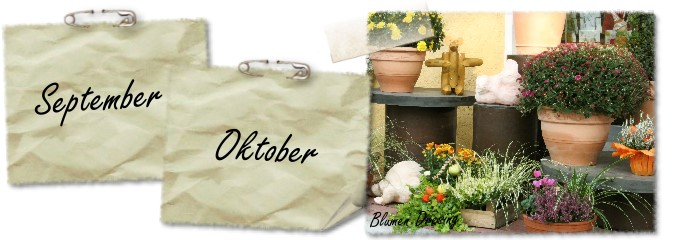Saisonpflanzen - Ihre Adresse für Floristik und Gartenbau in Dortmund